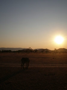 Sunset in Kunene... and a Donkey